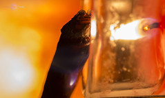 FUEGO (Almu_Martinez_Jiménez) Tags: fuego fire llama cande incienso luz light lightning canela cinnamon forma cerdito sombra trying canon