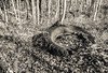 Old Tires In The Leaves (John Kocijanski) Tags: hss tires trash blackandwhite leaves canong15