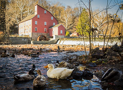 Hiding under the bridge (SMPhotos2548) Tags: duck bird animal red mill theredmill nj newjersey clinton clintonnj