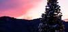 Christmas tree (wigerl - herwig ster) Tags: christmas fuji carinthia winter europa xmas austria europe tree fujicam licht 35mm christmastree cold bäume feldkirchen foto 2017 tollestimmung weihnachtsbaum fujixt1 abendrot kärnten weihnachten light sturban fujilens österreich baum trees