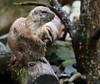 Spiel nicht mit den Schmuddelkindern (babsbaron) Tags: nature tiere animals schwarz schwanz black tail prärie präriehund prairie dog zoo erlebniszoo hannover