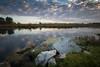 Ramo delle streghe (fabiokappa82) Tags: ticino ticinoriver pavia lombardia lomellina foto canon canon80d 1022 italia river landscape photograph land wild