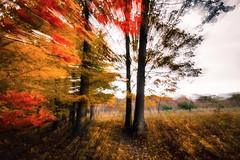 Autumn Shockwave (Bobby Palosaari) Tags: autumn fall zoom