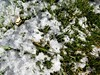 snow and green grass (kenjet) Tags: snow grass winter weather colorado green cold greengrass
