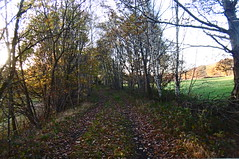 Former colliery branch line   Silkstone - Wath old railway    November 2017 (dave_attrill) Tags: collierybranch great central railway electrified woodhead sheffield victoria manchester picadilly closed 1970 1955 stocksbridge engine transpennine upper don trail penistone wortley wadsley neepsend dunford bridge thurgoland tunnel oxspring barnsley junction huddersfield allweather cycleway bridleway footpath remains silkstone 2016 1981 dove valley no1 road tree grass sky worsbroughbranch