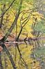 Autumn Reflections (KaDeWeGirl) Tags: newyorkcity bronx nybg botanical garden forest autumn trees yellow reflection bronxriver leaves