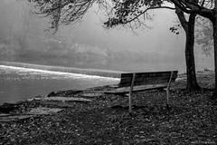 "Park Bench ""In Memory of.."" [Explored] ©2017 Steven Karp (kartofish) Tags: fog morning monochrome blackandwhite tylerstatepark neshaminycreek parkbench fuji fujifilm xt1 landscape buckscounty pennsylvania"