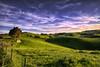 Deep Greens and Blues are the Colors I Choose... (Kevin_Jeffries) Tags: inspiredbyasong blue green sheep light bright pasture shadows road nikon nikkor d800 farmland hills rollinghills fence tree kevinjeffries sunset evening deepgreensandbluesarethecolorsichoose 240850mmf3545 newzealand canterbury southisland nz enzed downunder southcanterbury