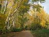 Otoño en Arre (Asun Idoate) Tags: nafarroa arre otoño sauces camino