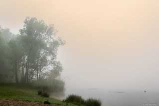 Sun, fog and pond in the morning