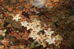 A journe on the  riverside (truelights samuel) Tags: mountain riverside leaves flowers journey