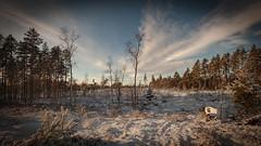 20171119003940 (koppomcolors) Tags: koppomcolors koppom värmland varmland sweden sverige scandinavia skog vinter forest snö snow
