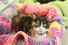 Daisy - 7 year old spayed female