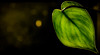 One leaf...... (tomk630) Tags: leaf green light dark color virginia beauty sunrise