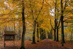 Invitation to take a walk (Mariannevanderwesten) Tags: herfstkleuren herfst autumncolours autumn bos nikon nature natuur fall bospad wandelpad ngc