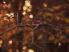 315_5613 (tirensaphir) Tags: forest fall orange wood light flou