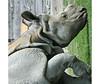 Climbing (ARRRRT) Tags: climbing arrrrt hippopotamus