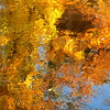 inflamed with passion (vertblu) Tags: autumncolours autumncolouring autumnlight autumn fall autumnfoliagemirrored water waterabstract watersurface ripples rippling bythestream reflection reflections reflectedfoliage reflectedskies reflectedtrees reflected mirroring mirrored abstract abstrakt abstraction abstractnature abstractsquared abstractreflections abstracted natureabstracted yellow orange brown blue green sunnyday vertblu 500x500 kwadrat bsquare colourful colours colourcontrast vividcolours distorted distortion