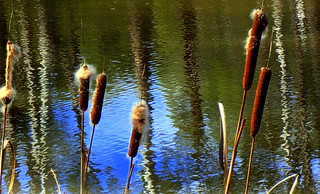 ZIG ZAG REFLECTIONS and BULRUSHES