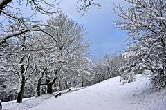 Winter Land (Tobi_2008) Tags: winter bäume trees schnee snow landschaft landscape hessen deutschland germany allemagne germania