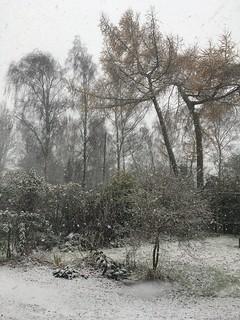 Obligatory snow picture