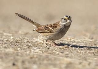 Bonus Bird!!