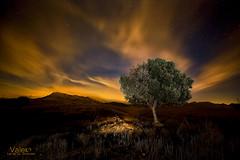 Solo al soñar tendremos libertad (Valero-Xixona) Tags: nocturnas naturaleza night noche canon rip valero árbol largaexpoxicion montaña oscuridad cielo