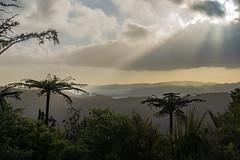 A Jurassic Dawn (Kadu Flyer) Tags: coromandel treefern sunrise jurassic sunburst newzealand whangapoua clouds sonyrx100m4
