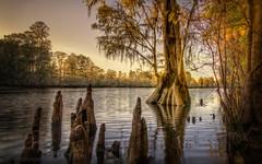 Disciples of Wisdom (JDS Fine Art Photography) Tags: nature beauty inspirational naturalbeauty spiritual light illumination