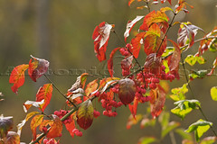 The autum's leaves (filippi antonio) Tags: autunno autumn foglie leaves leaf fall foliage colori colors natura nature macro closeup canon lombardia varesotto italia italy