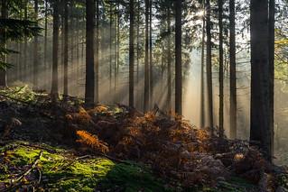 Herbststrahlen/Autumn Rays