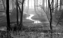 Wintermorning swirl (janneman2007) Tags: janneman2007 canon600d canon netherlands nederland niederlande paysbas stream beekje bach winter morning ochtend sunrise zonsopgang fog mist trees bomen water reflections