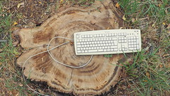 keyboard and stump (Justin van Damme) Tags: keyboard stump fall green grass brown tree white garbage trash junk found object