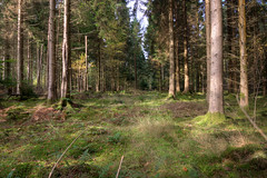 Woodland clearing (mak_9000) Tags: woodland nature wideangle