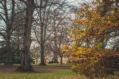 DSC_0128 (Understudy Photography) Tags: nationaltrust nature architecture christmas polsden polsdenlacey kent dorking surrey london guilford decoration natural polesdenlacey landscape autumn winter fall england scenery history detail nikon photography atmosphere