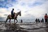 @Chennai (Raja. S) Tags: chennai marinabeach rajasubramaniyan horse