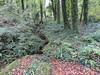Vallée (bpmm) Tags: bretagne côtesdarmor pointedudourven automne fougères ruisseau