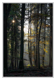 Hinter den Bäumen das Licht