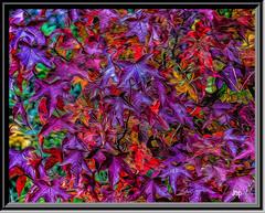 Lynn Haven, Florida Fall (Mike Pesseackey (UAGUY1)) Tags: art digitalart color florida fall leaves photoshop nikon nature november