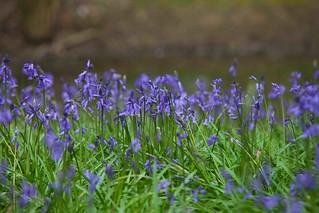 English Nature Sussex