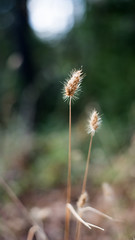 up and away (Middle aged Nikonite) Tags: foresthill california nikon d750 macro close up bokeh weed nature outdoor vertical forest meadow macrodreams