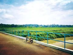 Kampung Belimbing Dalam - http://4sq.com/osKovC #green #nature #tree #grass #travel #holiday #holidayMalaysia #travelMalaysia #Asian #Malaysia #Malacca #大自然 #草 #树木 #旅行 #度假 #马来西亚旅行 #马来西亚度假 #亚洲 #马西亚 #发现马来西亚 #发现大马 #自游马来西亚 #马六甲 #花草树木 #天空 #sky