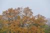 November-Nebel (Don Bello Photography) Tags: herbst 2017 november nebel laubbaum eiche neubrandenburg norddeutschland mecklenburgvorpommern mecklenburgischeseenplatte acdsee fz1000 panasonicfz1000 lumixfz1000 reinhardbellmann donbello donbellophotography