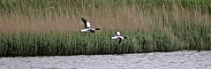 Seaton Wetlands, Seaton, Devon - May 2017 (Dis da fi we (was Hickatee)) Tags: stafford marsh discovery hide pond shelter classroom toilet facilities wildlife garden