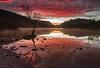 Lone Tree Skyfire (m00chas) Tags: canon6dmkii canon1740mm landscape llynpadarn skyfire lonetree wales snowdonia reflection