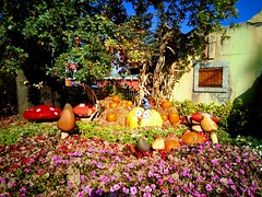 IMG_20171103_130425-EFFECTS (Puntin1969) Tags: parco novembre fiori aiuola telefonino