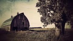 partners... (BillsExplorations) Tags: barn old farm tree fence ruraldecay rural country restored green oak barnsandfarms snapseed illinois