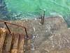 Steps (WHO 2003) Tags: cornwall stives sea steps