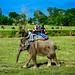 Tourists from Nepal and around the world visit Chitwan to go on safari