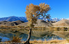 Owens Valley-94 (Denise Noelle Photography) Tags: owensriver bishopca sierranevadamountains monolake lonepine junelake mammothlakes
